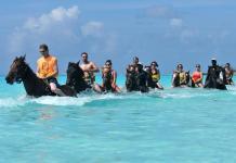 Berenang Bersama Hewan