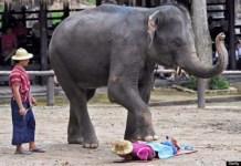Terapi Pijat Kaki Gajah di Thailand