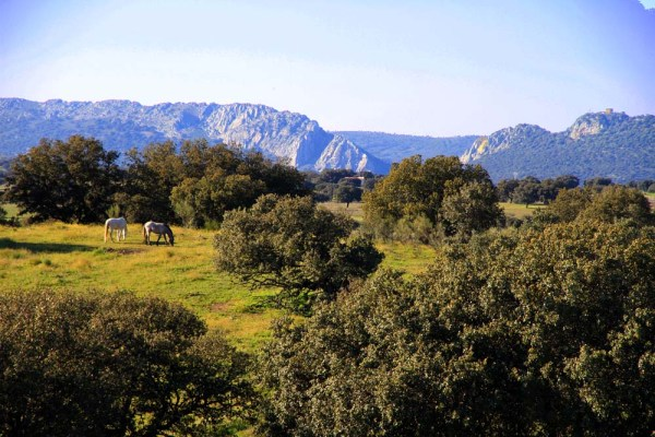 Monfragüe-Extremadura