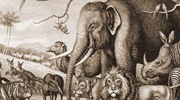 Zoológicos: centros de pesquisa e conservação ou máquinas de lucrar às custas de sofrimento animal? – Parte 1