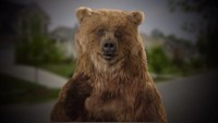 online #BearStare recreation Has fun #DroughtShaming Californians Into Saving Water