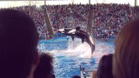 """brand Challenges"" Are Impacting SeaWorld's base line"