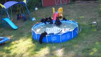 Watch A fun-Loving household Of Bears Crash a brand new Jersey family's outdoor Pool
