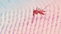 MIT Just Developed A Super-Cheap Paper Zika Test