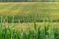 Midwestern BioAg Raises $21M to Ramp Up Fertilizer Production