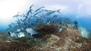 """Stop Right Now And Watch """"Chasing Coral"""" To Understand What We've Done To The Ocean"""