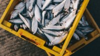 This Startup Turns Climate Pollution Into Fish Feed