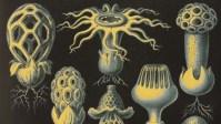 The 'Shroom Boom: Will Trendy Medicinal Mushrooms Go Mainstream In 2018?