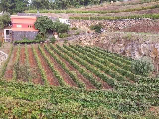 Bodegas El Níspero. Fuente: Canarias Actual