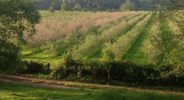 ¿Cómo afecta a la sidra su zona de producción?