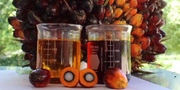 Aceite de palma. Copyright: www.lineaysalud.com