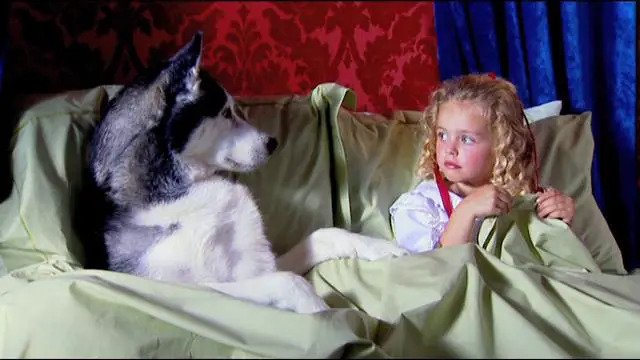 a dog is in bed looking at a girl