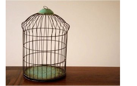 Oddbodies parrot