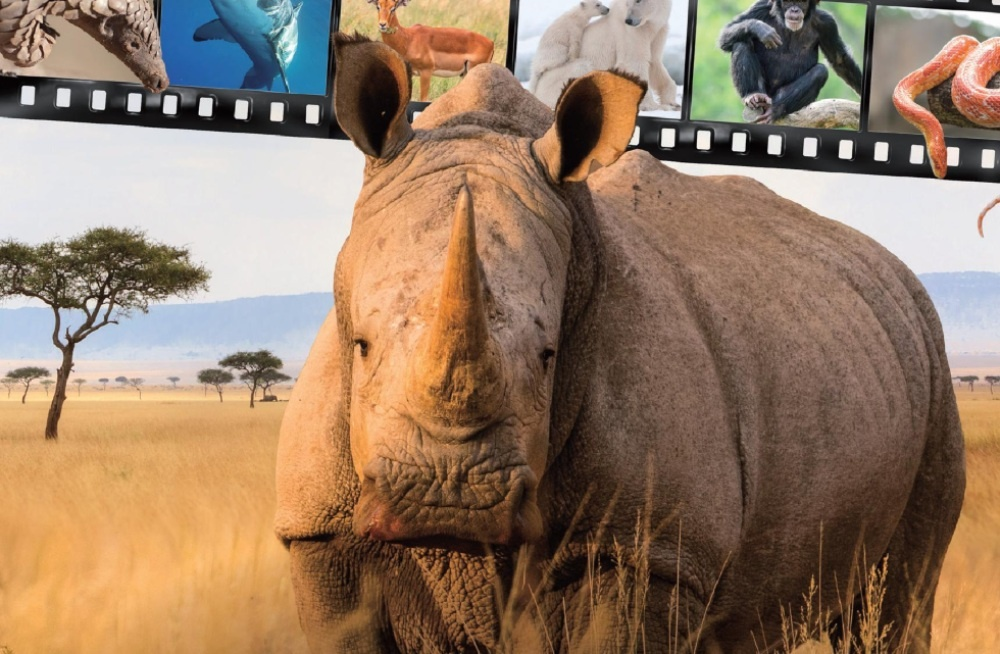 a rhinocerous with a film strip