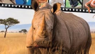 a rhinocerous with a film strip