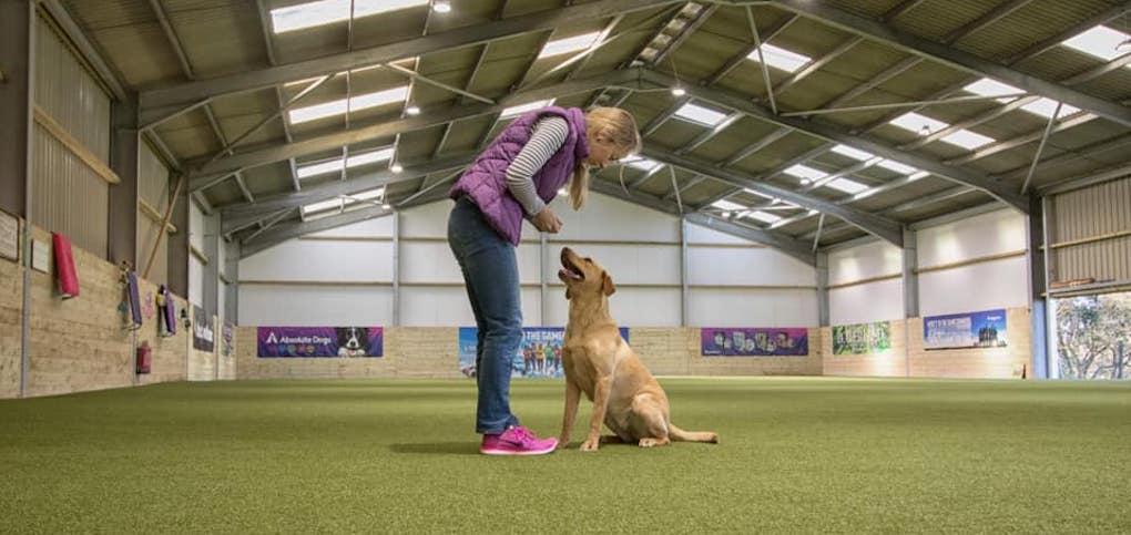 new-dog-training