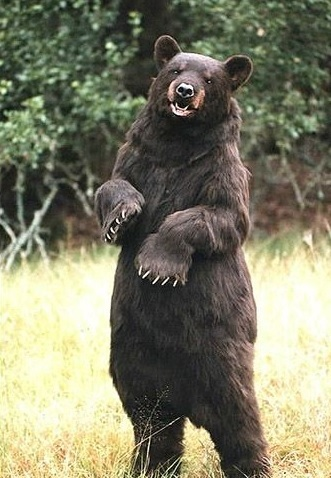 bear costume in the woods1