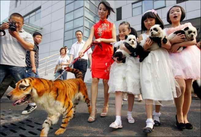 curiozitati despre china