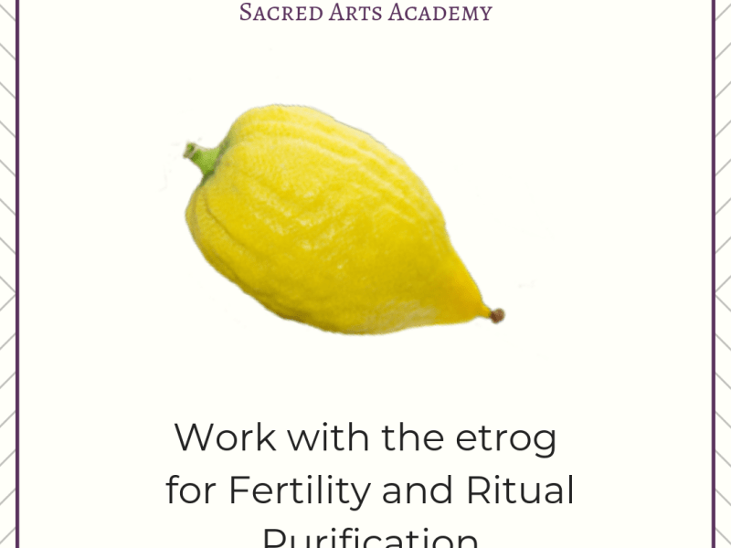 Work with the etrog for fertility and ritual purification