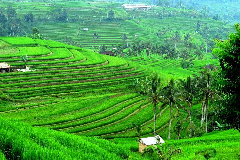 wisata tegalalang sawah terasering - Wisata Anti Mainstream Ubud - Tempat Viral di Ubud Bali