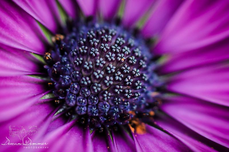Closeup Flower Macro #2 by Dewan Demmer Photography
