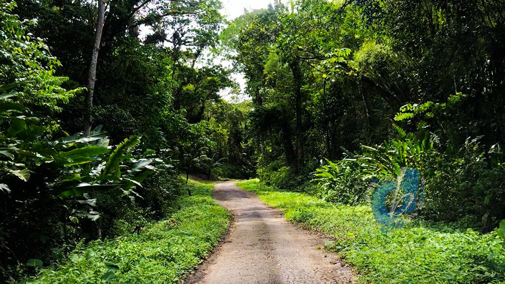 Guyaguayare Road