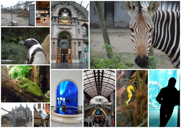 2015 12 week 49 zoo