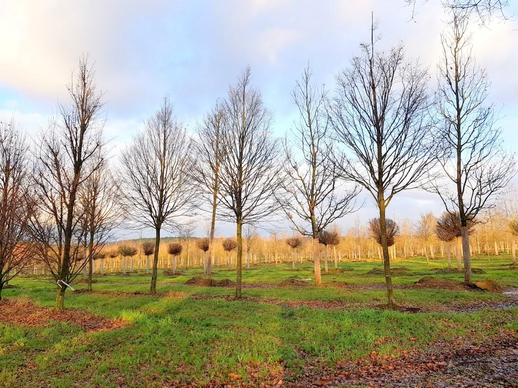 Wandelen doorheen boomkwekerijen, dat is de Kelbergenwandeling