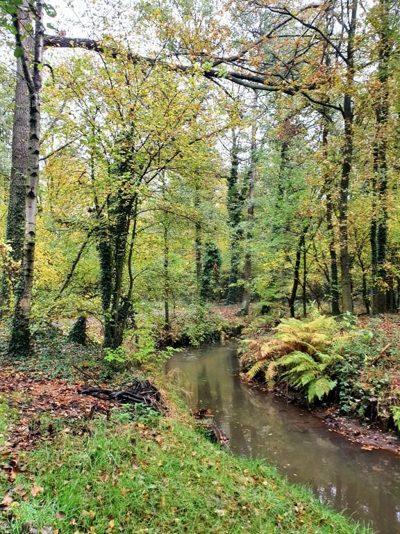 Bos, bos en nog eens bos in Bolderberg, maar evengoed water!