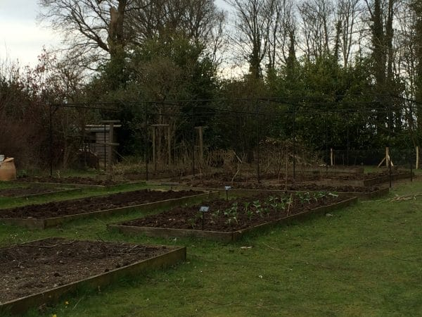 Site requiring new fruit cage, Mark Cross, East Sussex