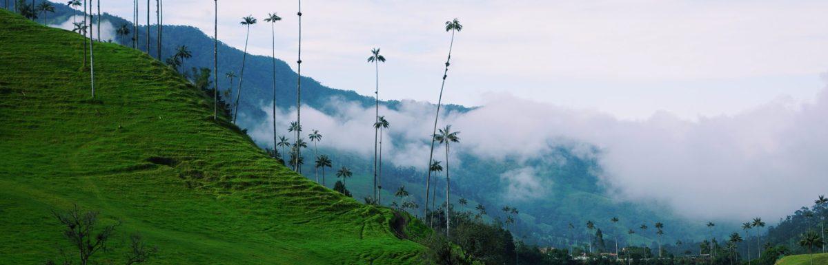 Cocora Valley (Salento, Colombia)