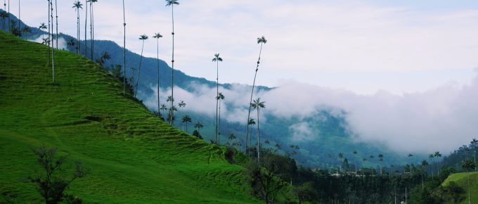 Cocora Valley (Salento, Colombia)