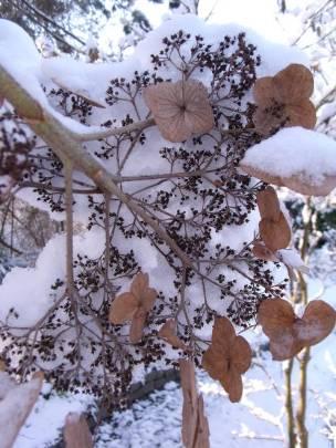 De ZintuigenTuin - Seizoen -Winter - (25)