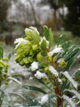 De ZintuigenTuin - Seizoen -Winter - (29)