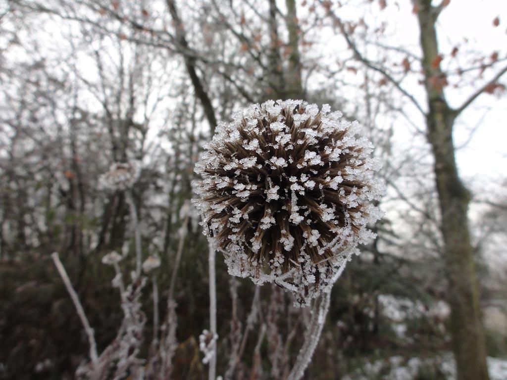 De ZintuigenTuin - Seizoen -Winter - (3)