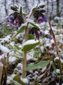 De ZintuigenTuin - Seizoen -Winter - (31)