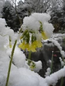 De ZintuigenTuin - Seizoen -Winter - (36)