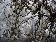 De ZintuigenTuin - Seizoen -Winter - (40)