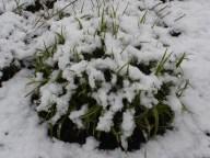 De ZintuigenTuin - Seizoen -Winter - (41)