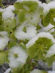De ZintuigenTuin - Seizoen -Winter - (43)