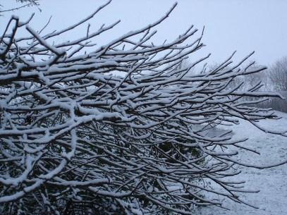De ZintuigenTuin - Seizoen -Winter - (46)