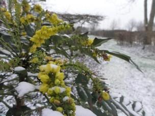 De ZintuigenTuin - Seizoen -Winter - (69)