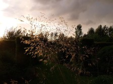 Voorzomer - ZintuigenTuin - Heerhugowaard (26)