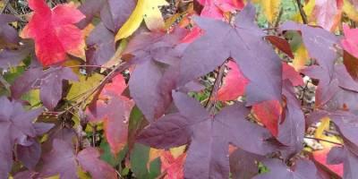 herfstkleuren - heerhugowaard - zintuigen - tuin