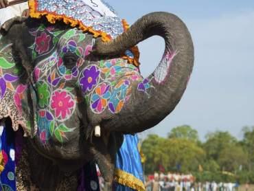 Jaipur Elephant Festival DforDelhi