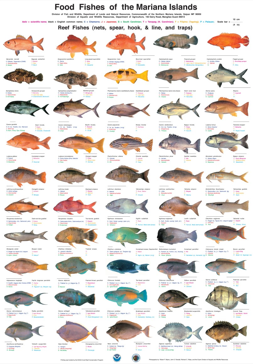 Types Aquarium Fish Pictures Names Allcanwear Org
