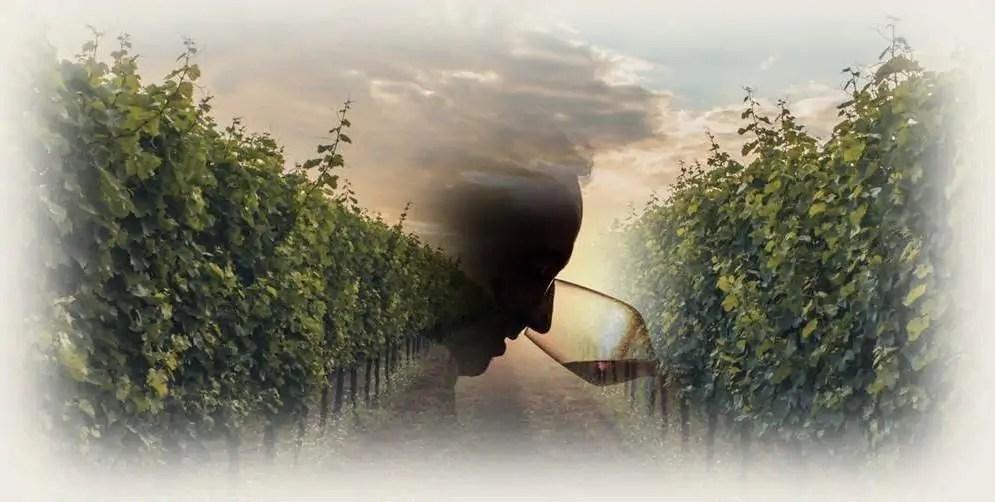 """""""Tipico"""" – Corso di degustazione e avvicinamento ai vini e ai vitigni autoctoni italiani"""