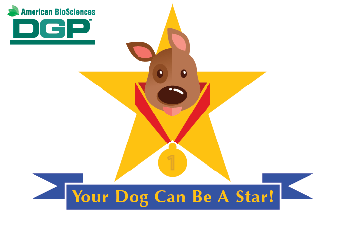 Your Dog Can Be A Star