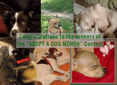 Adopted-Contest-Winners-2-1