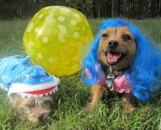 Miss Bailey the Left Shark and Jada Perry in costume